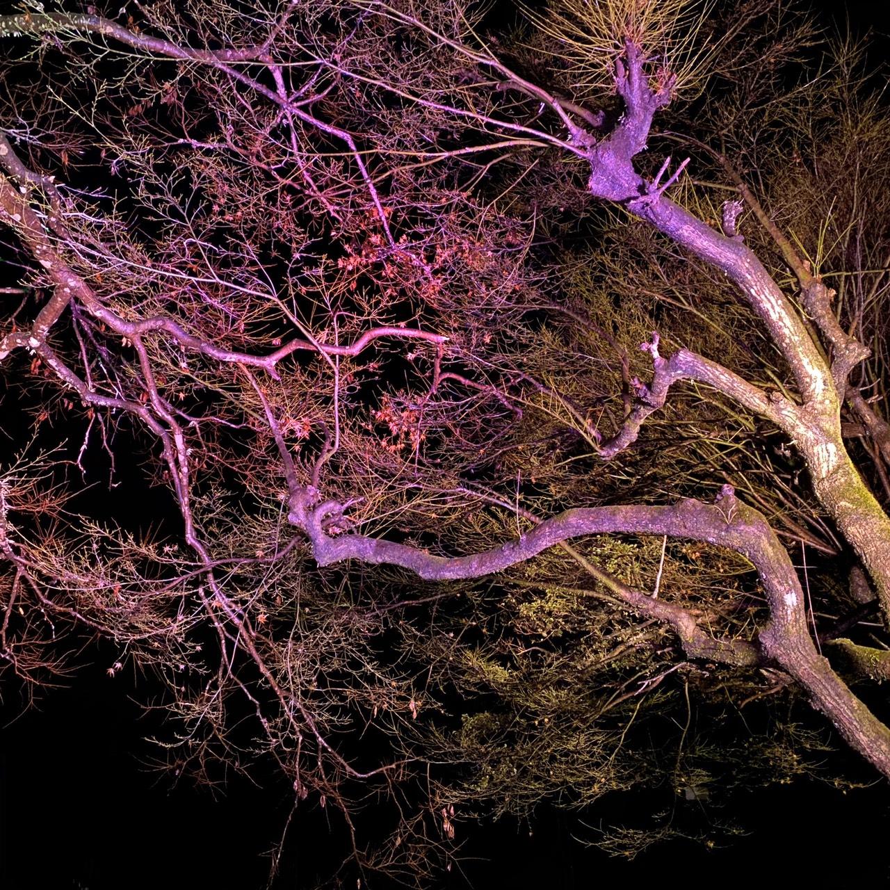 龍河洞の森ライトアップ